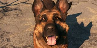 Dogmeat from fallout 4, a german shephard dog.