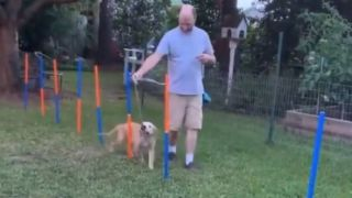 dog fails obstacle course video