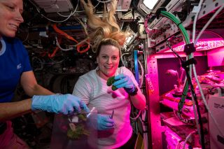 NASA astronauts Shannon Walker and Kate Rubins as seen collecting plant samples on the International Space Station on Jan. 28, 2021.