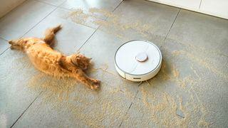 Cat with robot vacuum