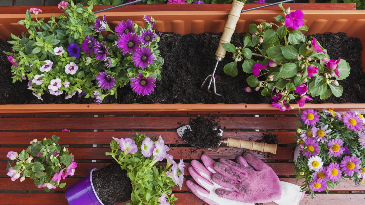 Get the gardening done in an hour with this failsafe method for using your time wisely