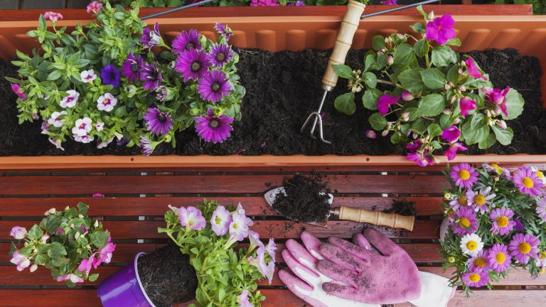 best plants for window boxes: planting a window box