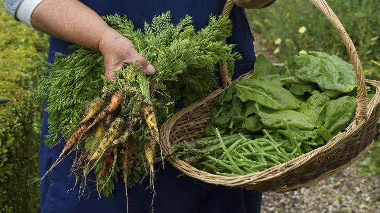 how to grow carrots mixed varieties picked with other veg