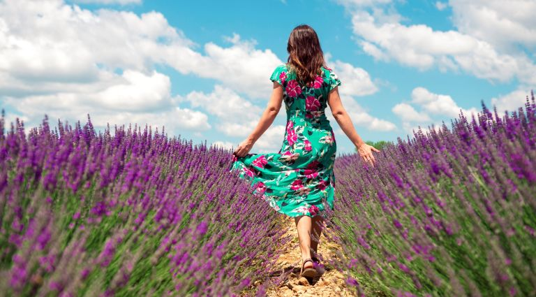 France, Provence, Valensole plateau, back view of woman walking among lavender fields in summer sundress