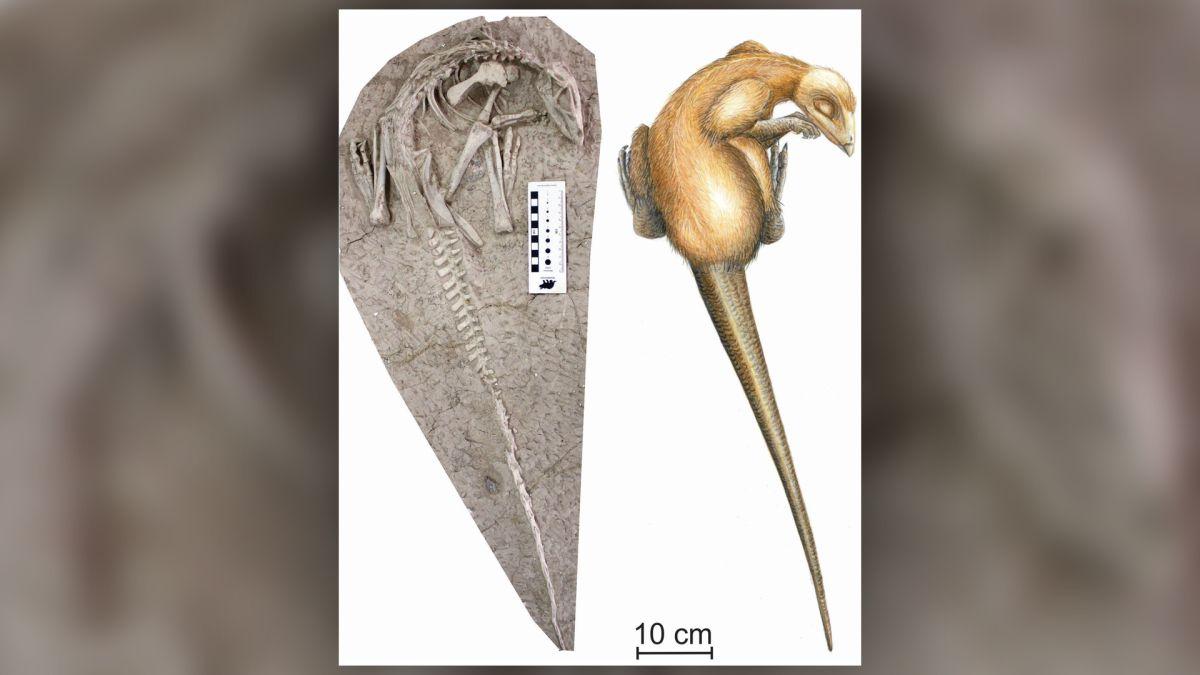 New 'eternal sleeper' dinosaur species was entombed while still alive