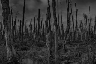 Dead forest, earth systems, ecology