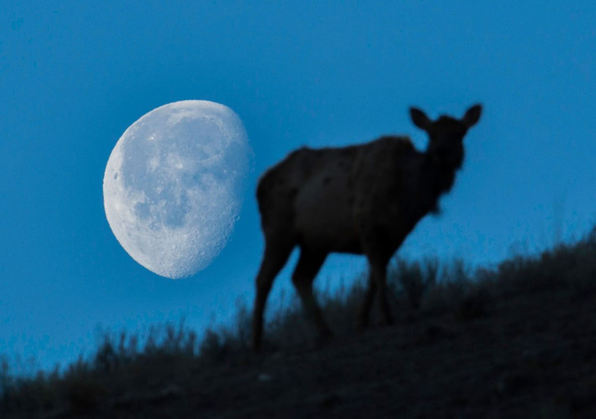 See July's Full Buck Moon of 2021 rise tonight