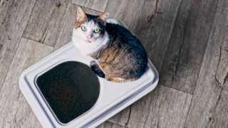 how to stop a cat peeing outside the litter box