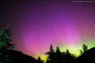 Auroral Violet Hues