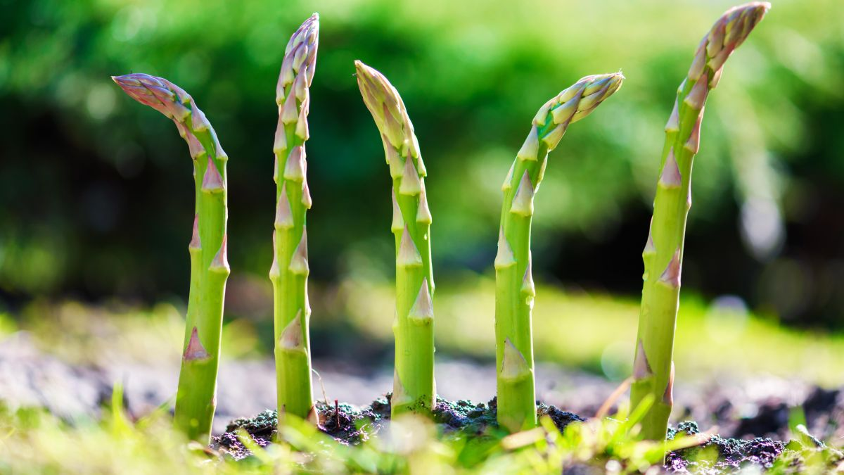 Vegetables to plant in October: 10 easy crops to sow and grow in your plot