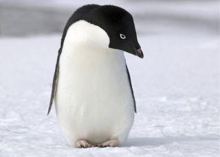 penguin-101208-02