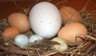 eggs-organic-100826-02