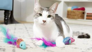best cat subscription boxes: cat surrounded by toys