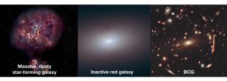 "These three panels show, from left to right, what the galaxy XMM-2599's evolutionary trajectory might be, beginning as a dusty star-forming galaxy, then becoming a dead galaxy, and perhaps ending up as a ""brightest cluster galaxy,"" or BCG."