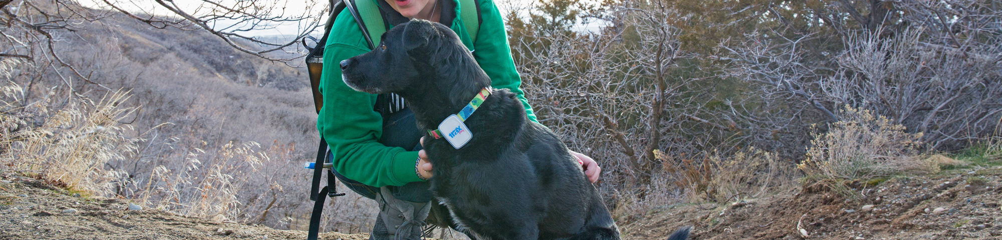 Best Pet Tracking Devices 2019 - GPS Trackers for Dogs, Cats