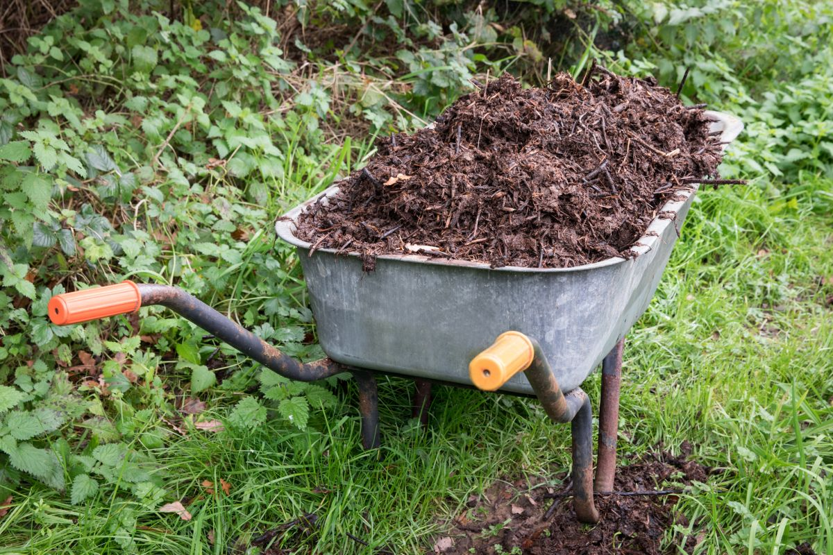 7 steps to make your own compost at home