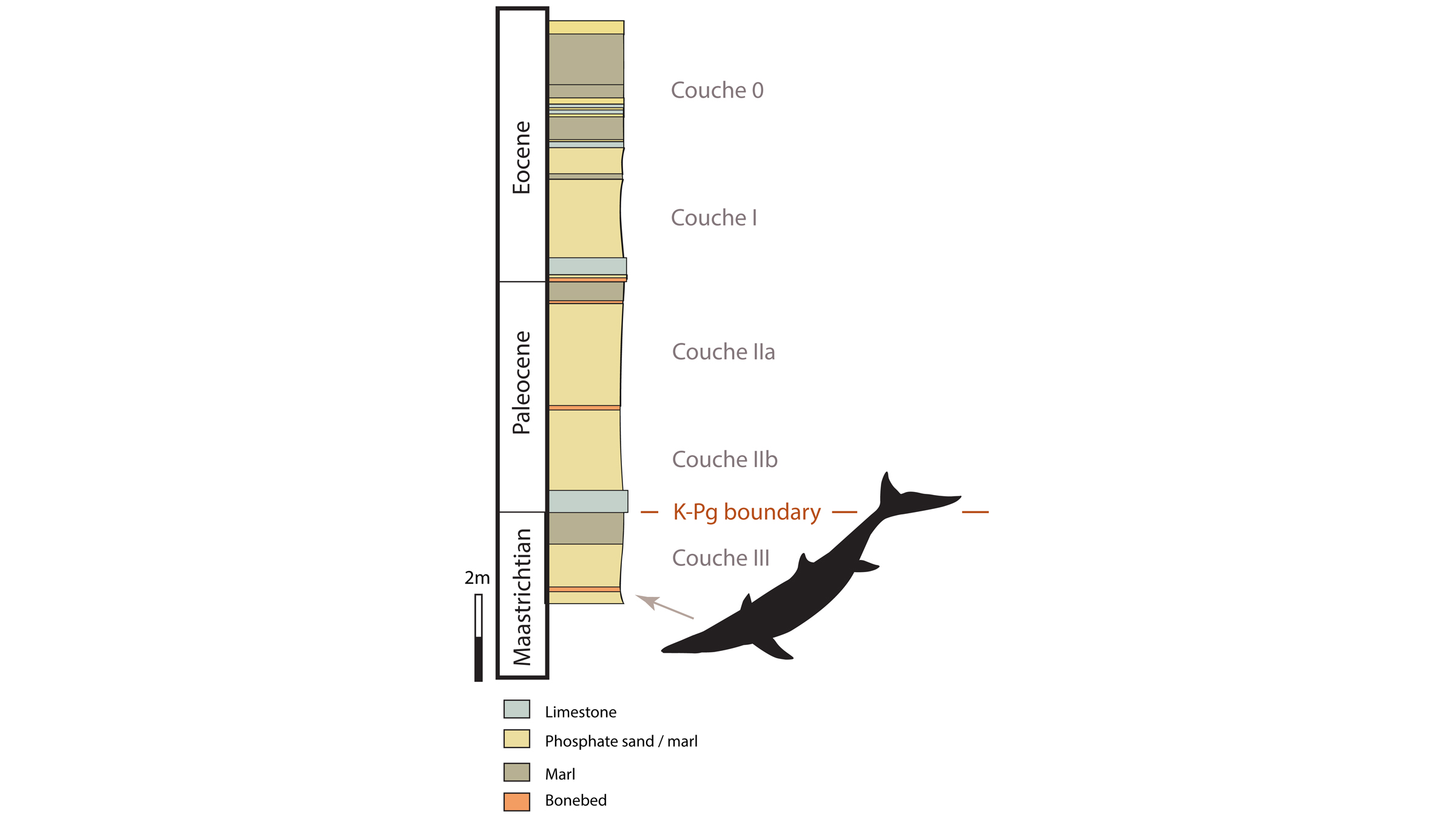 The fossils belonging to the newfound mosasaur were found in rock older than the K-Pg boundary, a term used for the mass extinction that killed the non-avian dinosaurs.