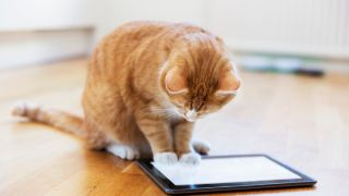 Ginger cat watching videos for cats on an iPad