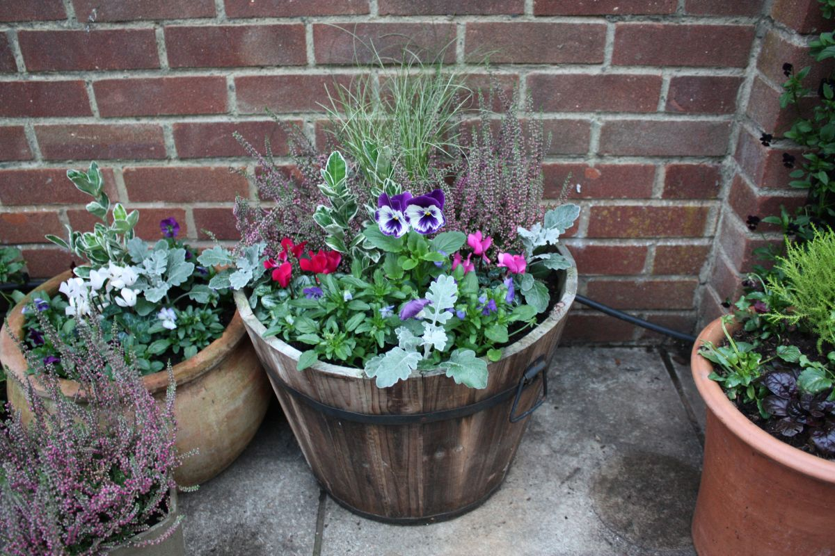 How To Plant A Winter Container Follow Our Step By Step Guide For Adding Seasonal Colour Gardeningetc