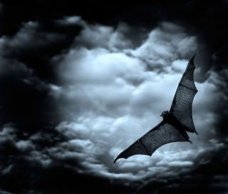 A black bat flying against moonlit clouds