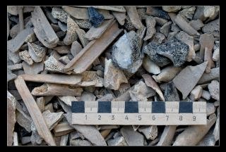 animal bones in dump
