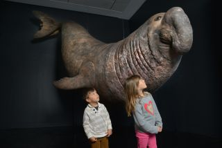 Elephant seal model