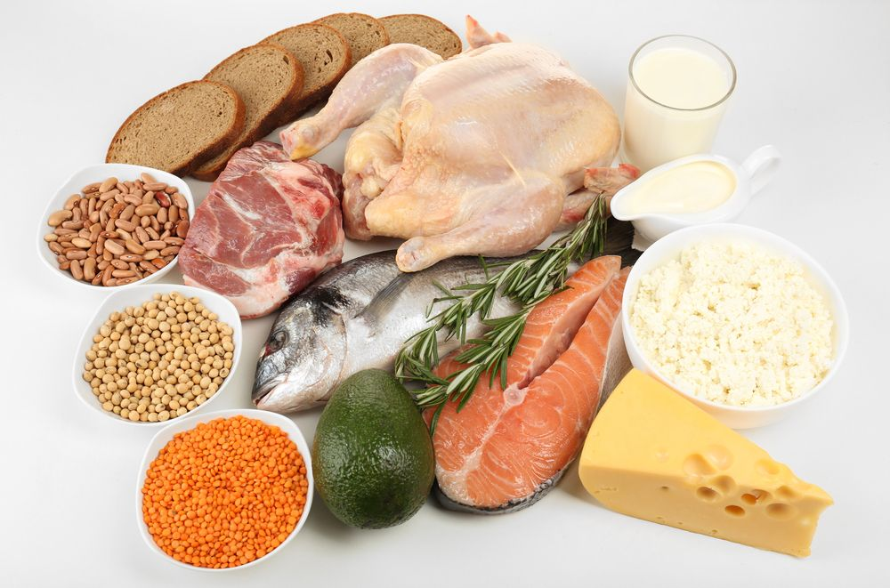 What Is Protein Live Science