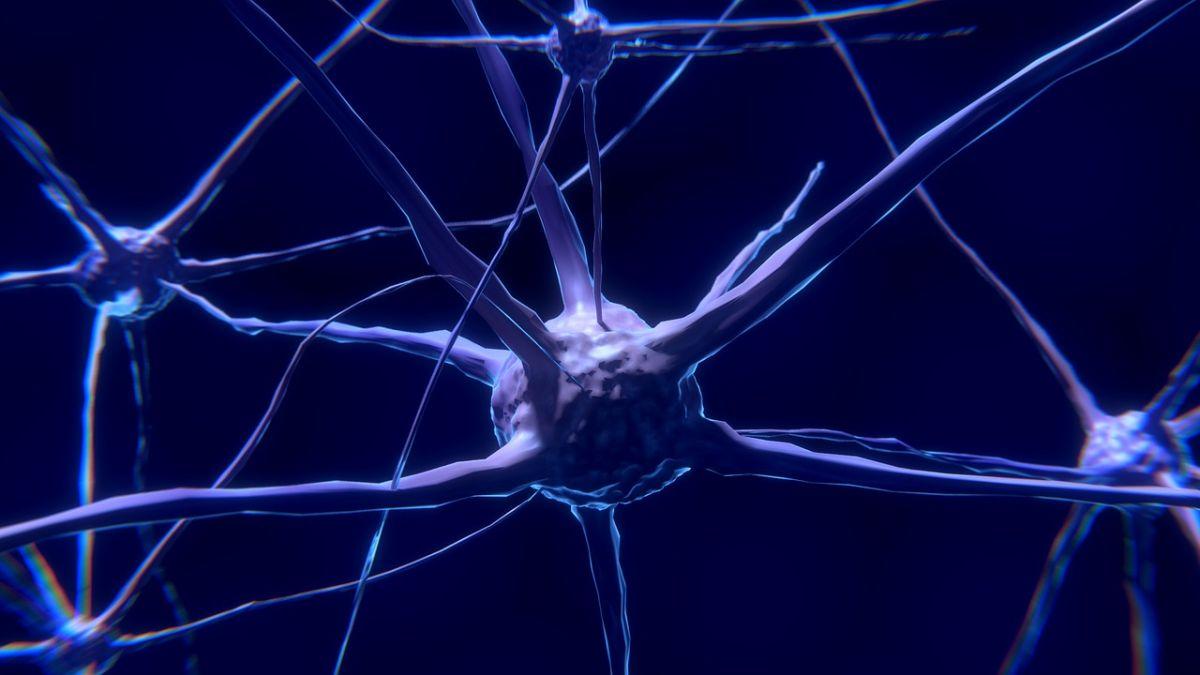 neuroninio tinklo dvejetainis variantas