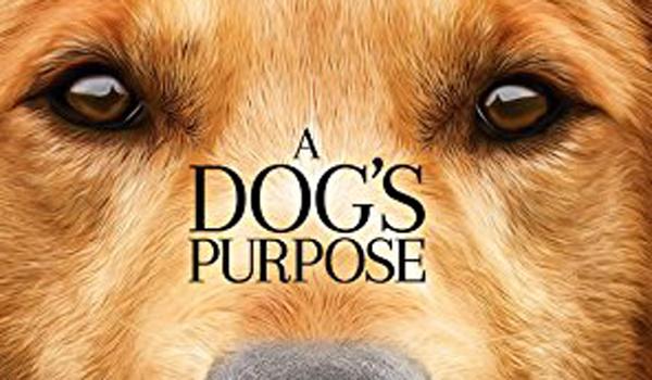 a dog's purpose controversy scene