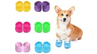 Dog Crocs