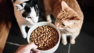 Two cats eating dry cat food