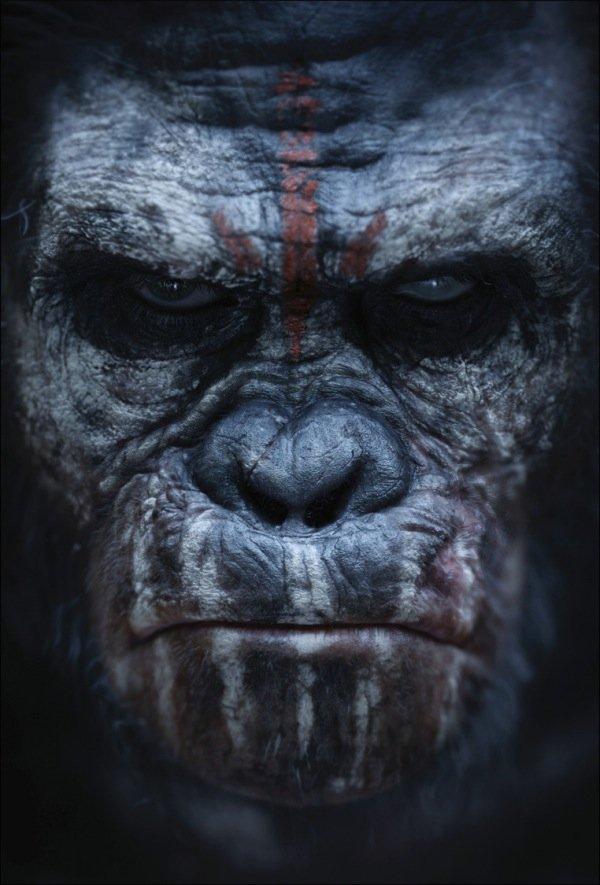 Apes Glum