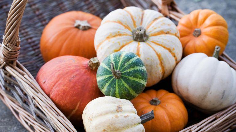 Cucurbita maxima. Basket of assorted squashes and pumpkins