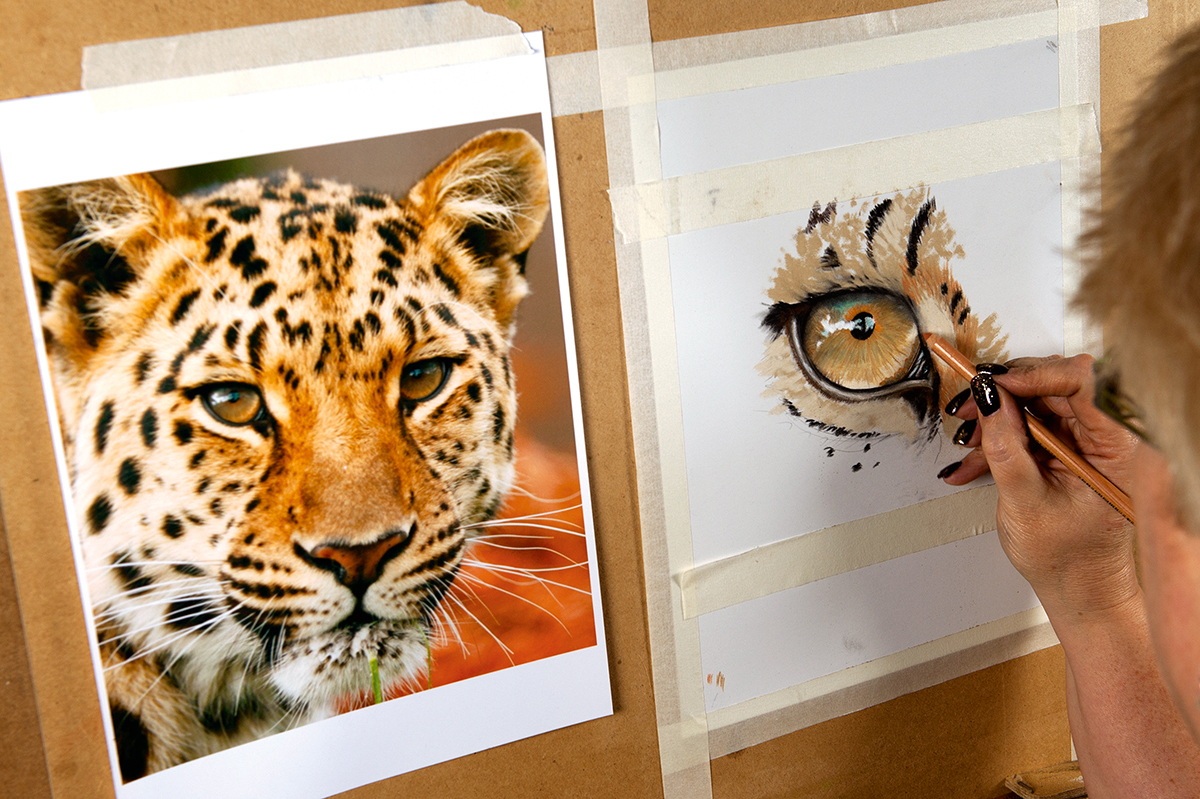 sketch of leopard eye next to image of a leopard