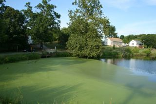 An algae bloom in North Carolina, a region of the country equipped for broad-scale algae growth.