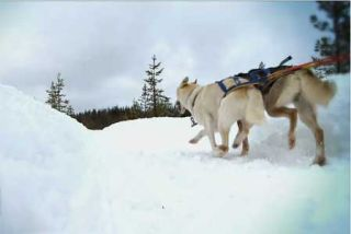 From the Classroom: Best Tech Practice Video of the Week - The Iditarod & Math