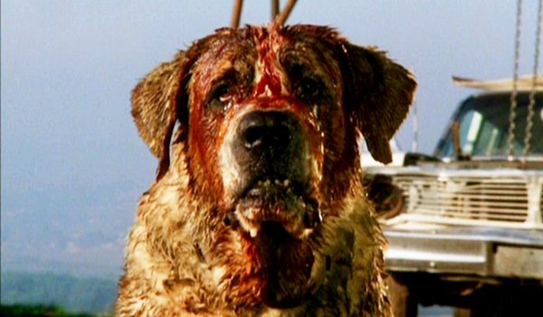 Cujo bloodied and waiting for a victim