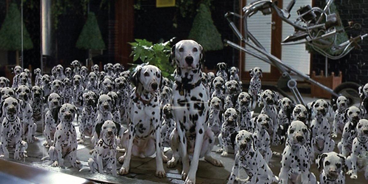 The spotted dogs from 101 Dalmatians