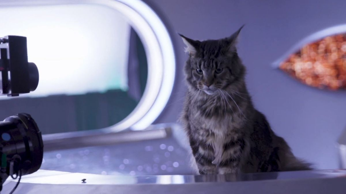 A cat named Grudge is beaming into 'Star Trek: Discovery' season 3
