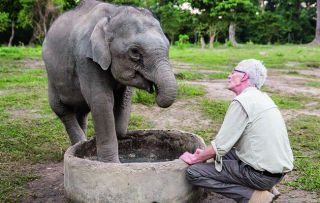 Paul O'Grady bids farewell to India's animals as his journey comes to an end