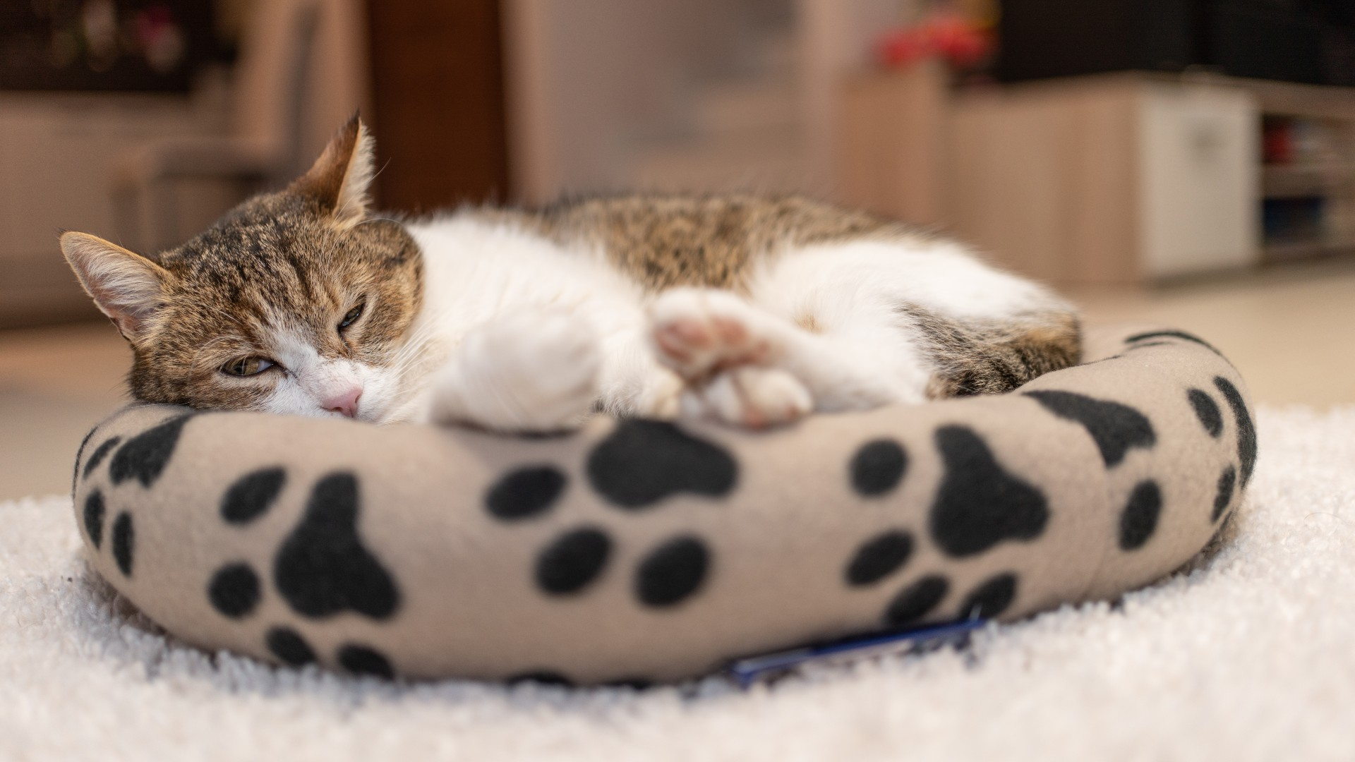 Best Cat Bed Including Luxury Living With Our Premium Penthouse Pick Petsradar