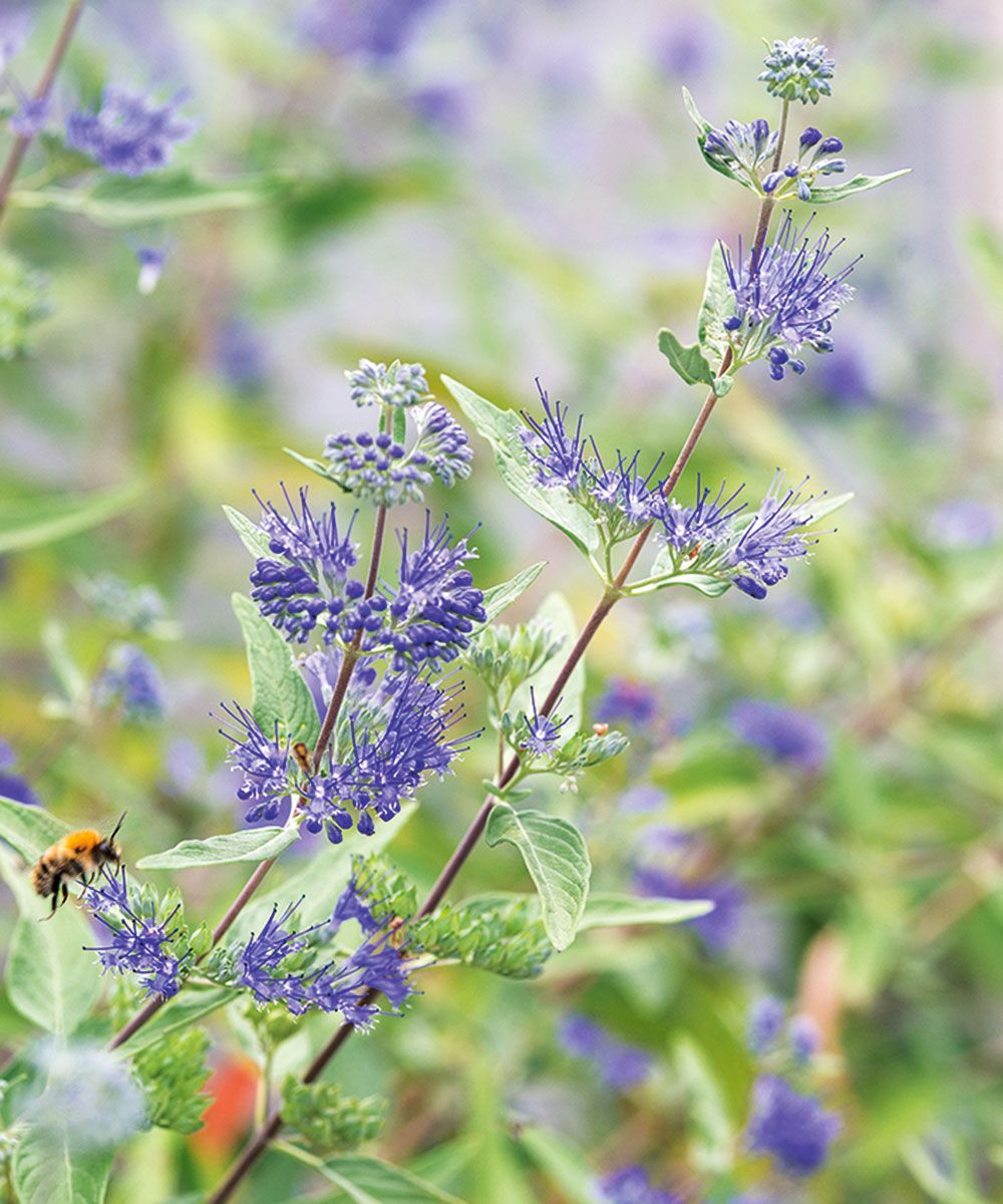 Use these healthy plants to improve your wellbeing, health and happiness