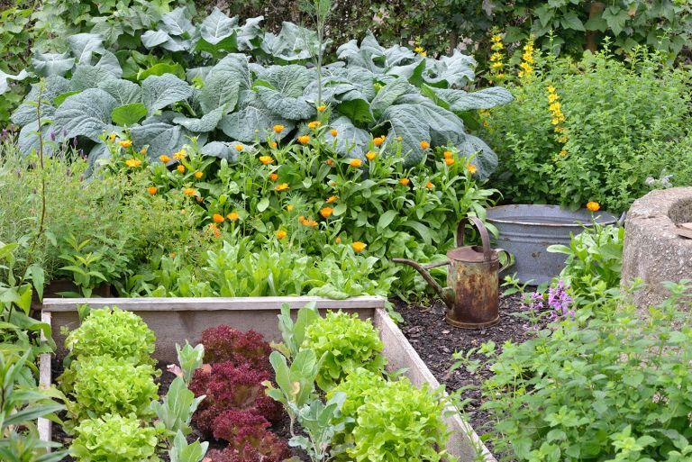 no dig expert tips vegetable garden patch