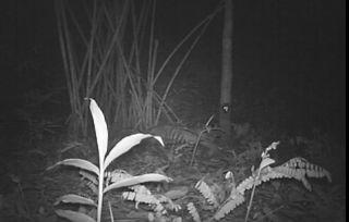 Tiger cub in Thailand