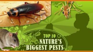 Nature's Biggest Pests