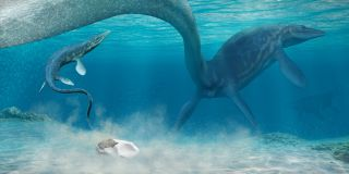 A mosasaur, an ancient reptile that lived during the Mesozoic, might have laid the newly described fossil egg found in Antarctica.