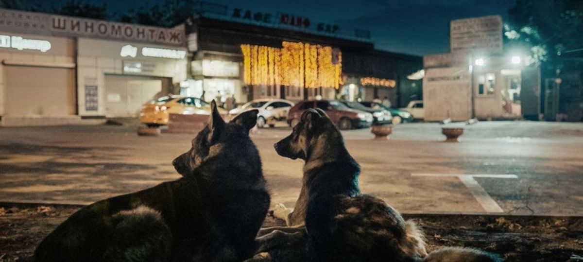 Laika and her crew: 'Space Dogs' documentary explores Moscow through a stray's eyes thumbnail
