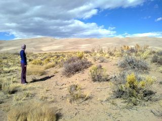 Nabkhas, or coppice dunes, in Great Sand Dunes Park in Colorado.