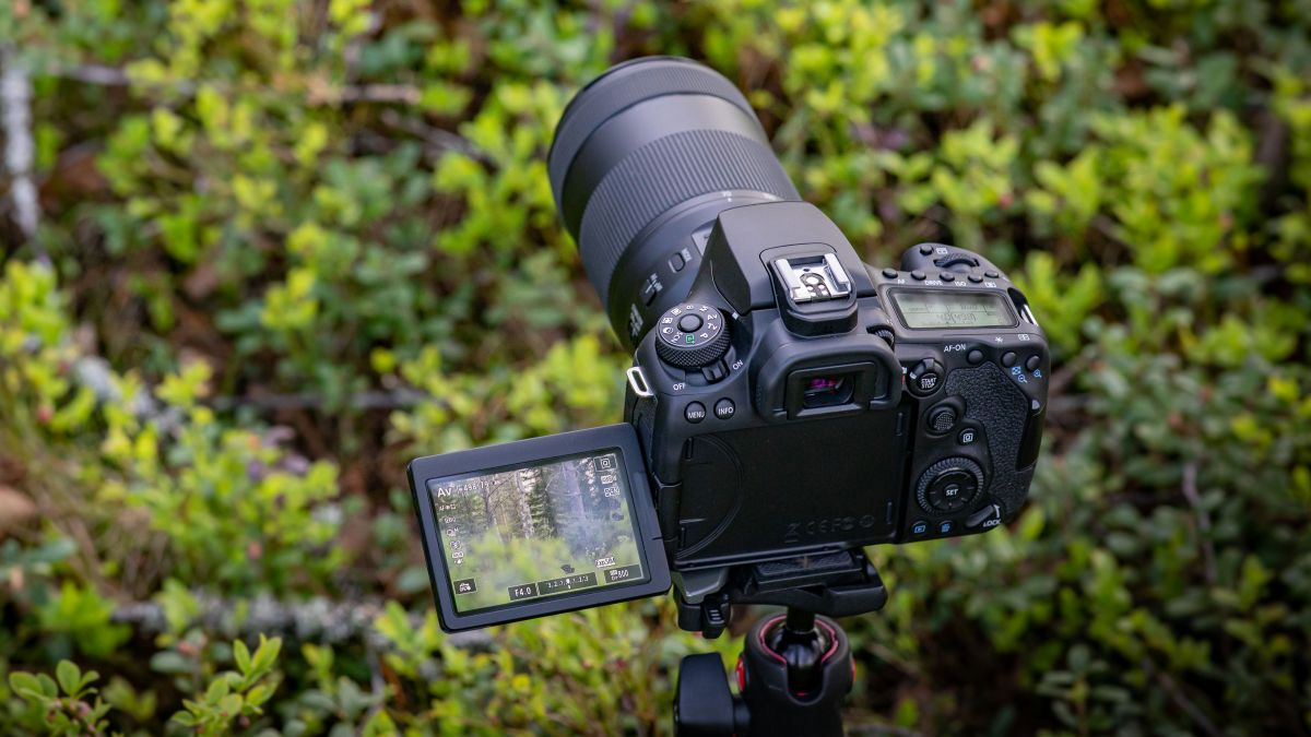 The best DSLR in 2021: old-school DSLRs for beginners, enthusiasts and pros