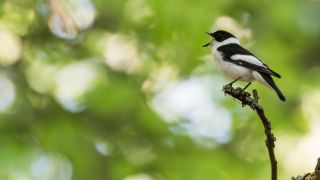Bird singing on twig